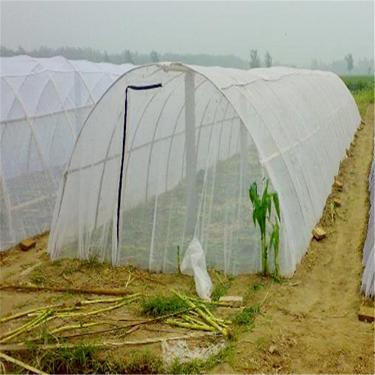 志广蚂蚱养殖网批发大棚蝗虫网25目胡蜂网加厚好料咬不透